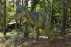 Pachycephalosaure : le conquil